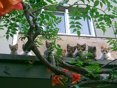 A new home for the kittens (Marchnwe) Tags: cats cute house kitten