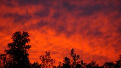 Sunset Treat 1