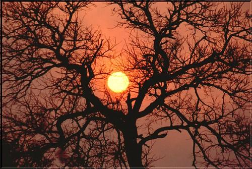 "SA 00 Tramonto al Kruger Park 2 • <a style=""font-size:0.8em;"" href=""http://www.flickr.com/photos/49106436@N00/42969836/"" target=""_blank"">View on Flickr</a>"