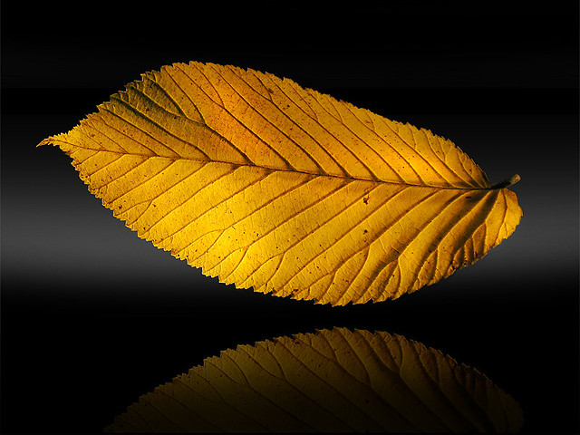 Beautiful Pictures Of Leaves In Variety Of Shapes And Colors