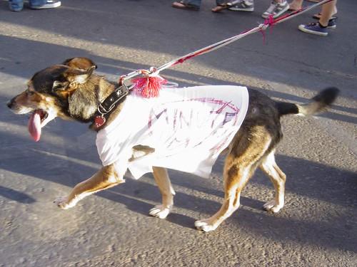 Anti-Minuteman dog