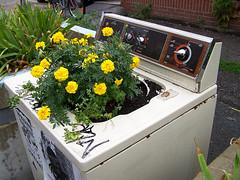 Green Laundry!