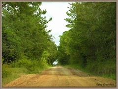 Country Road in Georgia (Old Shoe Woman) Tags: trees usa georgia seasons photobook dirtroad southgeorgia pinetrees countryroad dilosept05 dilosep05 moomini