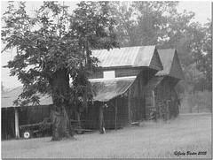 B&W Old Barn in the Rain on Burlap (Old Shoe Woman) Tags: usa georgia southgeorgia dilosep05 barn photoshop rain oldbarn black white bw dilosept05bw dilosept05