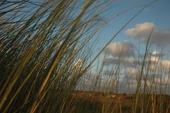 Autumn (bonnym E. Haus) Tags: ilikegrass grass light autumn clouds