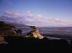 The Lone Cypress, Pebble Beach (17-mile drive) (artandscience) Tags: lonecypress pebblebeach cypress tree california coastline provia100f largeformat