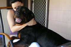 Good Morning (alzeus1) Tags: dog pets love dogs puppy rottweiler zeus rottie cuddles rottweiller