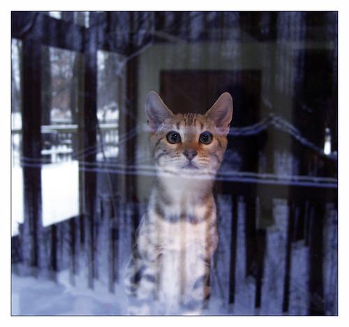 Odin in the Winter Window