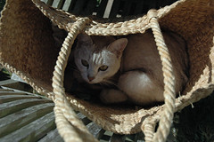 Lilith in a basket