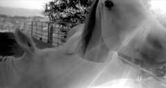Biting (efo) Tags: california longexposure bw horse oakland vintagecamera equestrian chabot antiquecamera kodak1a hcafbw