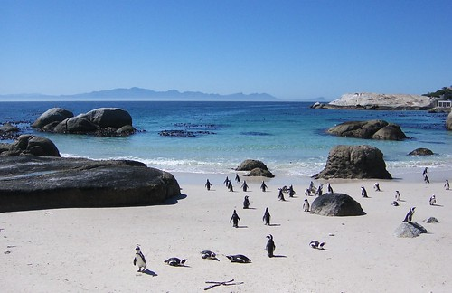 Penguins on South African beach