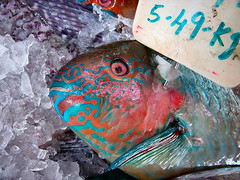 Catford Parrot (ljcybergal) Tags: fish parrot red blue ice catford lewisham london pink parrotfish