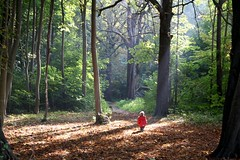 small boy big trees (bies) Tags: autumn trees boy people holland tree fall netherlands childhood tag3 taggedout forest woods tag2 tag1 searchthebest little small dream zeeland direction fairy tiny dreamy sunbeam ridinghood growup domburg westhove