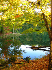 Ogle Lake (alykat) Tags: statepark autumn favorite lake reflection fall nature water ilovenature hiking indiana s2is browncounty oglelake explore25oct05 interestingness424 i500