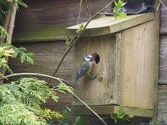 Bird entering its bird-house