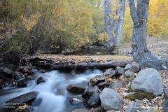Lundy Canyon Creek