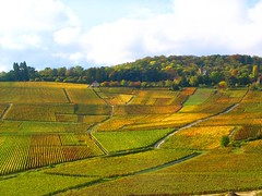 Champagne en automne (Fredww) Tags: autumn france fall vineyard wine champagne s1 hautvillers