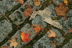 Cobblestones (mezzoblue) Tags: autumn red orange green fall leaves yellow gold seasonal cobblestones weathered gastown mezzoblueheader