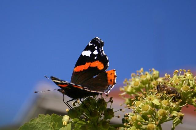 Butterfly on blue sky V