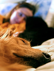 Night Brings Sleep, Love and the Whole Family Through the Lens (Andrew Morrell Photography) Tags: love alexborell alex goldenretriever loopsie jojo wife warmth sleepingdog dog cat nighttime 15fav top20dogpix