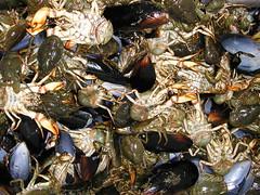 Ensalada de pancoras (Feita) Tags: crustaceos chile