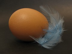 The chicken of the egg (kool_skatkat) Tags: blue macro topf25 topc25 topv111 closeup topv2222 canon topv555 topv333 close searchthebest topv1111 egg topv999 topv444 feather 123 best topv222 eggs topv777 top20 questions topv666 200v topf35 pick10 topv888 continuum topf30 v1000 koolskatkat topv1000 v900 interestingness45 62points i500 nov8200545