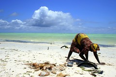 after 6 months (Farl) Tags: poverty africa sea woman sun beach colors work tanzania sand women coconut gutentag labor harvest rope processing zanzibar husk mattress harvesting coir paje livelihood removegtag