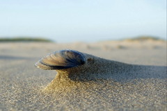 sphinx II (broterham) Tags: colour macro beach nature netherlands dutch sphinx terschelling waddeneiland sand nederland shell noordzee erosion northsea friesland frysln winderosion skylge kkll