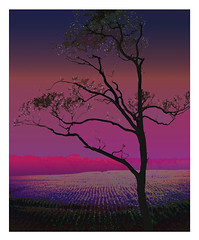 Catching the Stars from the Morning (Mr Bultitude) Tags: morning trees winter sky tree nature beauty photoshop stars dawn interesting purple manipulation drake mostfavourited nickdrake mrbultitude cotcmostfavorited neilcarey