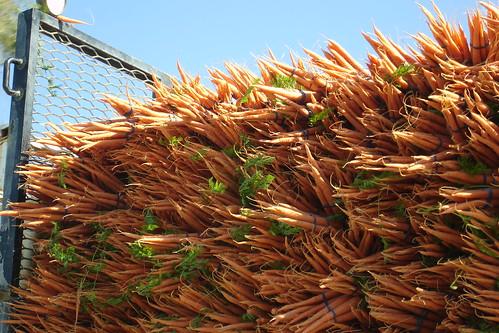 Zanahorias 4