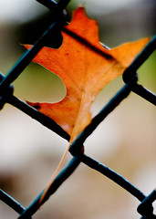 New beginnings (Ryan Brenizer) Tags: 2005 nyc newyorkcity november orange newyork green topf25 leaf topf50 nikon bokeh manhattan d70s noflash urbannature foundobject morningsideheights 50mmf14ais