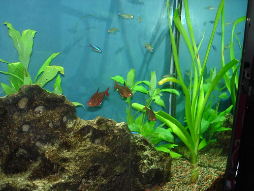 My Fish Tank by ryarwood, on Flickr