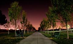 Long Exposure in the Park (Mike Bradshaw - Cursive Q Designs) Tags: california park longexposure trees topv111 nightshot canonxt emeraldglenpark