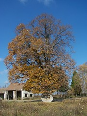 ..once upon time..was tree... (ManonManon) Tags: blue autumn sky color tree green nature wow womenonly 1on1 1on1objects