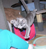 One Last Leap! (Bubba Trout) Tags: cute tag3 taggedout cat 100v interestingness top20animalpix kitten tag2 tag1 play kittens 10f foster hemi allrightsreserved top20cats i500 ©allrightsreserved interestingness1500 3waychallenge 3wc