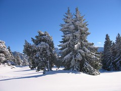 First snows of winter (andywalker1) Tags: trees winter snow andrewwalker chamrousse andywalker