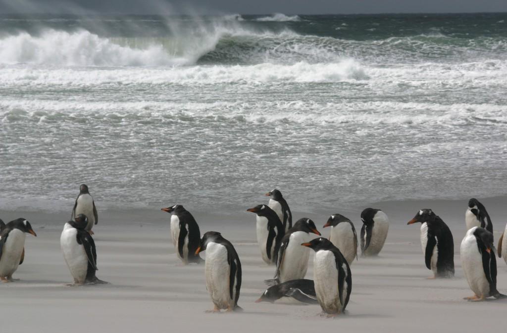 Paisajes de nuestras Islas Malvinas