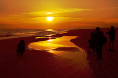 El dorado en el Delta. (www.jordiarmengol.net (Xip)) Tags: espaa topf25 fotosencadenadas lafotodelasemana spain topv333 albaluminis delta xip catalunya prat lmff lmff1 lmff2 lfscontraluces