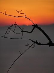 22 Jan 2006 - Genoa, Italy - # 3 (cienne45) Tags: sunset italy albalumin