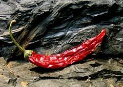 Red Hot Chili Pepper (Rosebud 23) Tags: black rot stone chili mummy stein redhotchilipeppers schwarz peperoni mumie photodominoes ccmpred
