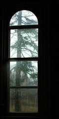 Sorrow (glantine) Tags: tree geometric nature rain wow wonder march quote walk pluie eglantine sorrow arbre spruce viewfrommywindow citation cheznous tvroom peine deniselevertov i500 vuedemafenetre interestingness340oct72006 blackribbonbeauty