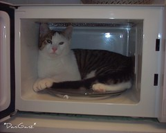 Fusillo nel microonde 1 - Fusillo in the Microwave 1 (*DaniGanz*) Tags: white cute cat interestingness interesting kitten tabby explore mostinteresting microwave gatto bianco micio 495 tigercat microonde occhiverdi fusillo biancoetigrato tigrato daniganz flickrsexplore interestingcat lmaoanimalphotoaward
