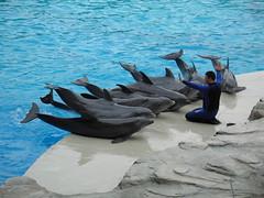 Delfini - by Roby Ferrari