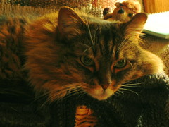 Cat and Hedgehog (Dieguita) Tags: ccc19