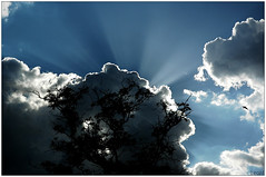when the sun goes down (LeonR.) Tags: parque sunset pordosol brazil sky tree sol topf25 topc25 topv111 brasília brasil clouds raios contraluz nikon d70s fotolog 100v10f nuvens nikkor árvore 1870mm topphotoblog removedfromnikkorfortags
