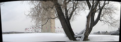 Washington Monument Tree Panorama