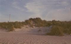 assenza | presenza (a l k o i p a) Tags: wild film beach analog 35mm sand nikon fujifilm salento puglia nikonf501 pellicola fujicolorsuperiaxtra400 macchiamediterranea torrechianca