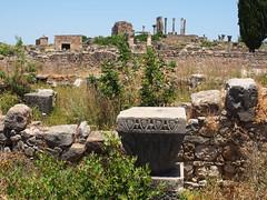 P5261301 (lnewman333) Tags: africa ancient northafrica historic worldheritagesite morocco fez maroc maghreb column fes volubilis romanruins unescosite 1stcenturyad