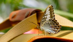 Photo of Butterfly on camera bag