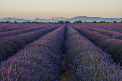 En Provence (sarah_presh) Tags: flowers sunset summer holiday france field evening purple plateau lavender july mauve provence allemagneenprovence valensole lavenderfield nikond7100